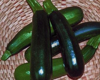 VSQZ)~BLACK ZUCCHINI Squash~Seed!~~~~~Excellent Summer Flavor!