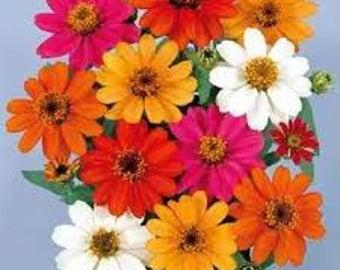 AZPR)~PROFUSION MIX Zinnia~Seeds!!!!~~~~~~Massive Quantities!