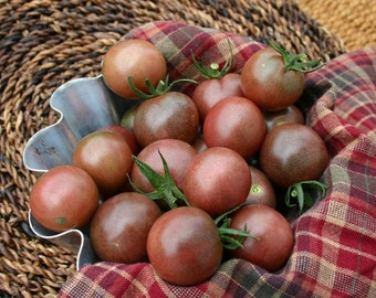 VTC) CHOCOLATE CHERRY Tomato~Seeds!!!!!!~~~~~~Treat Yourself!
