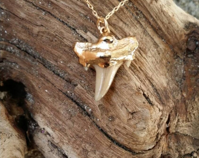 Shark tooth necklace, gold necklace, tiny necklace, genuine tooth, Shark Tooth, Tiny Gold Necklace, Dainty, Beach, Ocean, Dainty Necklace