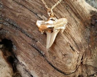 Shark tooth necklace, gold necklace, tiny necklace, genuine tooth