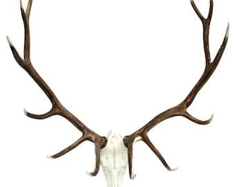 Faux Elk European mount, Antler Mount, Elk Antlers