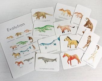 Evolution Flashcards   Set of 12 handprinted cards   INSTANT DOWNLOAD