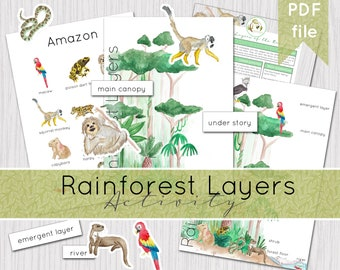 Rainforest Layers Printable Activity | Instant Download