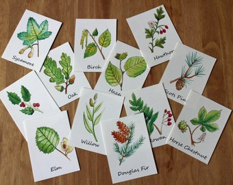 Leaf ID Flashcards   Learning About Leaves Printable   British Trees