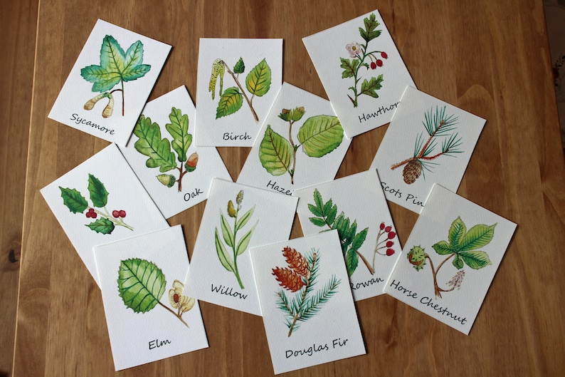 Leaf ID Flashcards  Learning About Leaves Printable  British image 0
