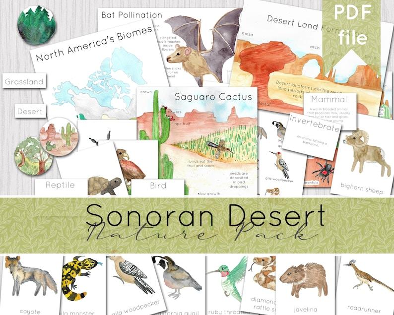 Sonoran Desert Nature Pack  North American Nature Study  image 0