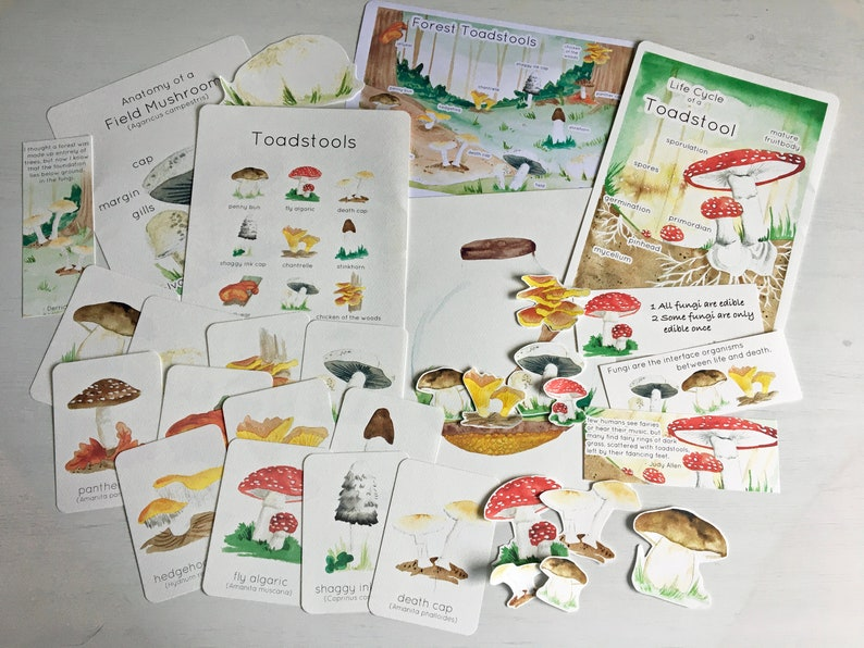 Fungus Nature Pack