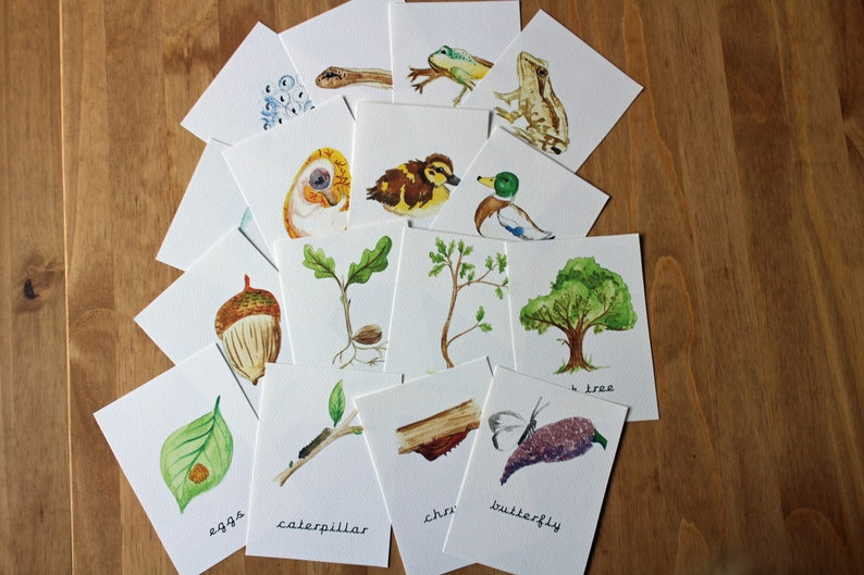 Life Cycle Cards  Watercolour Flash Cards  Nature Study image 0