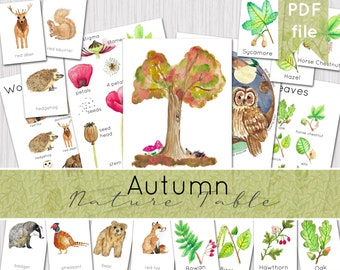 Autumn Nature Table Resources | Printable Poster & Flashcards | INSTANT DOWNLOAD