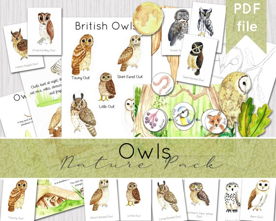 Owl Nature Pack  Watercolour Nature Journaling