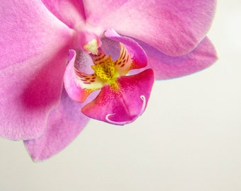 Instant Digital Download Pink Phalaenopsis