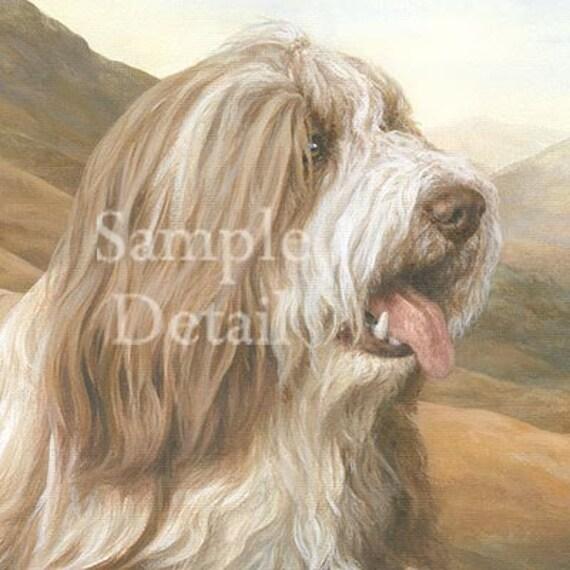 BEARDED COLLIE /'beardie/' dog print /'Winter/'s Glow/'