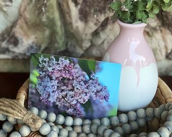 Mackinac Island Michigan Lilac Postcard