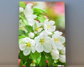 Michigan Apple Blossoms Nature Photo Spring Wall Art