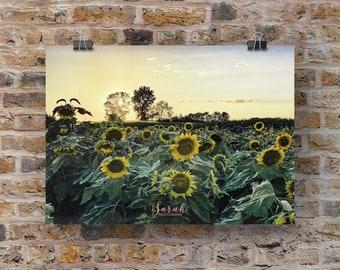 Sunflower Field at Sunset Michigan Print Wall Art