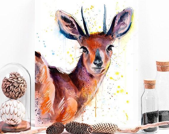 Steenbok watercolor painting print by Slaveika Aladjova, art, animal, illustration, home decor, Nursery, gift, Wildlife, wall art