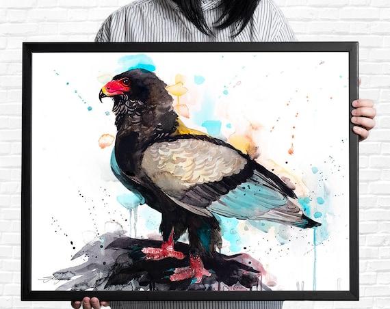 Bateleur Eagle watercolor framed canvas by Slaveika Aladjova, Limited edition, art, animal, animal illustration,bird art
