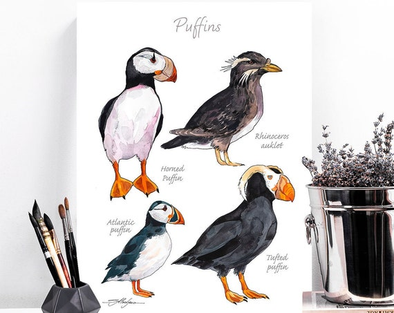 Puffins chart watercolor painting print by Slaveika Aladjova, art, animal, illustration, home decor, Nursery, Wildlife, animal species, bird