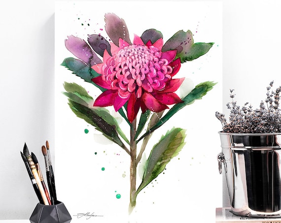 Waratah watercolor painting print by Slaveika Aladjova, art, illustration, home decor, Contemporary, Australian native plant, Botanical