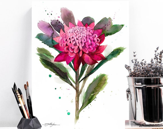 Waratah watercolor painting print by Slaveika Aladjova, art, illustration, home decor, Contemporary, Australian native plant, Botanical