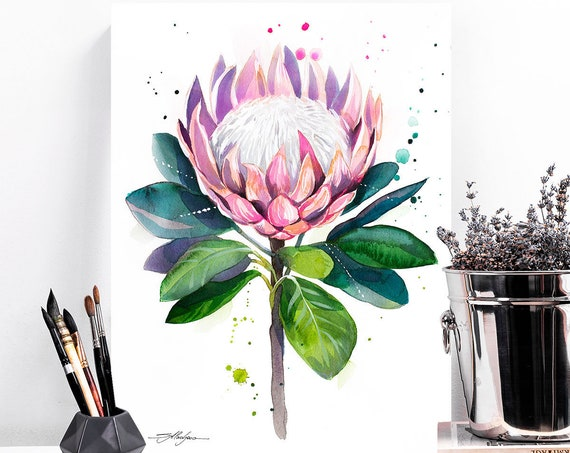King protea watercolor painting print by Slaveika Aladjova, art, illustration, home decor, Contemporary, Australian native plant, Botanical