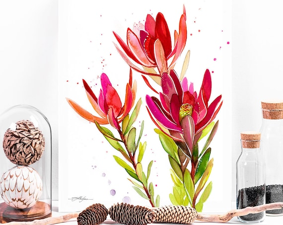 Leucadendron, Safari Sunset flower watercolor painting print by Slaveika Aladjova, illustration, home decor, Contemporary,plant ,Botanical