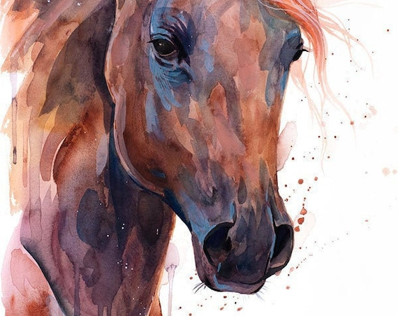 Original Watercolour Painting- Brown Arabian Horse art, animal, illustration, animal watercolor, animals paintings, animals, portrait,
