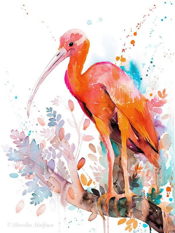 Original Watercolour Painting- Scarlet Ibis art, animal, illustration, animal watercolor, animals paintings, animals, portrait,
