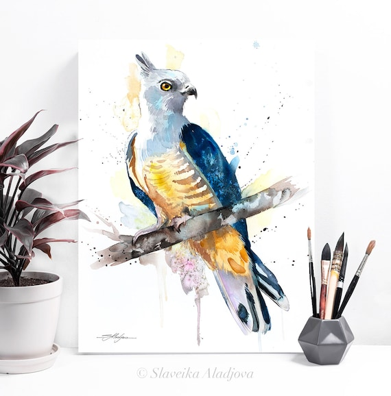 Pacific baza watercolor painting print by Slaveika Aladjova, art, animal, illustration, bird, home decor, wall art, gift, Wildlife