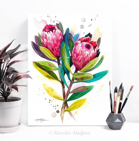 Protea Pink Ice watercolor painting print by Slaveika Aladjova, illustration, home decor, Contemporary, Australian native plant, Botanical