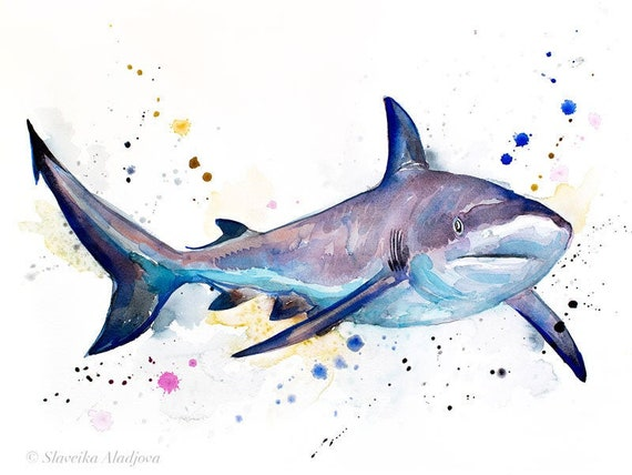 Original Watercolour Painting- Grey reef shark art, animal, illustration, animal watercolor, animals paintings, animals, portrait,