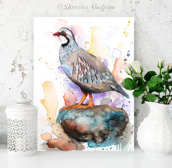 Red-legged partridge watercolor painting print by Slaveika Aladjova,art, animal, illustration, bird, home decor, wall art, gift, portrait,
