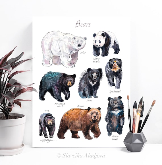 Bears chart watercolor painting print by Slaveika Aladjova, animal, illustration, home decor, Nursery, gift, Wildlife, animal species, panda