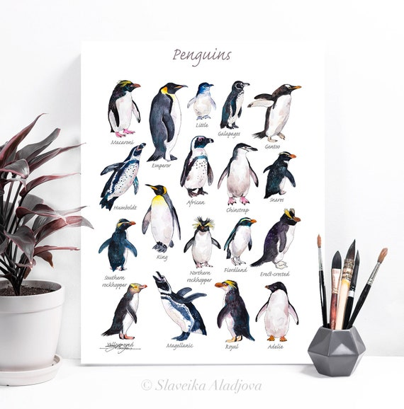 Penguins watercolor painting print by Slaveika Aladjova, art, animal, illustration, home decor, Nursery, Wildlife, animal species, bird