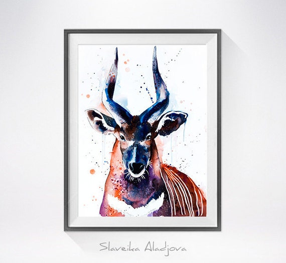 Original Watercolour Painting- Bongo ,Bongo art, animal illustration, animal watercolor, animals paintings, animals, portrait,