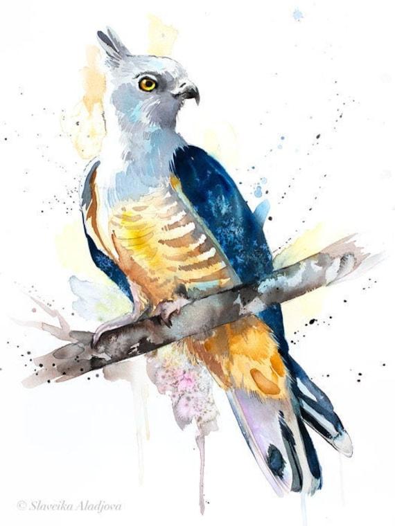 Original Watercolour Painting- Pacific baza art, animal, illustration, animal watercolor, animals paintings, animals, portrait,