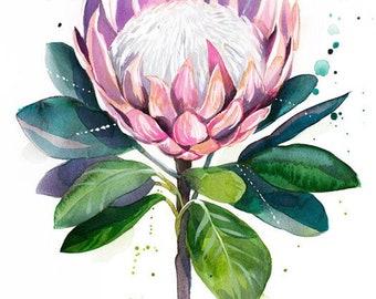 Original Watercolour Painting- King protea art,, illustration, paintings, Contemporary, plant, Botanical