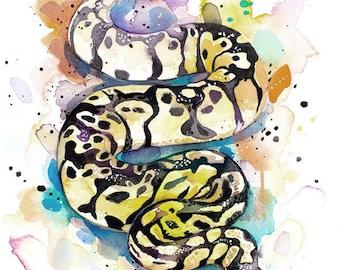 Original Watercolour Painting- Pastel Ball Python Snake art,, illustration, paintings, Contemporary,
