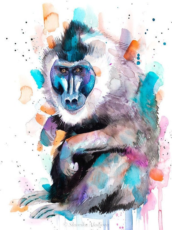 Original Watercolour Painting- Drill Monkey art, animal, illustration, animal watercolor, animals paintings, animals, portrait,