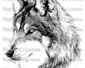 Wolf Face. Wolf PNG.  Animal PNG. Wolf Prints. Wolf Image. Wolf Picture. Wolf Art. Wolf Clipart. Wolf Drawing. Wolf Illustrations. No. 0133.