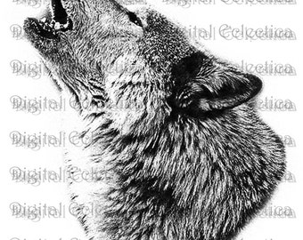 Wolf Howling. Wolf PNG.  Animal PNG. Wolf Prints. Wolf Image. Wolf Picture. Wolf Art. Wolf Clipart. Wolf Drawing. Wolf Pictures. No. 0043.