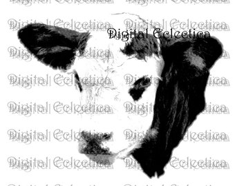 Moo Cow Engraving. Cow PNG. Farm PNG. Cow Prints. Cow Images. Cow Pictures. Cow Art. Cow Clipart. Cow Drawings. Cow Illustrations. No. 0045.