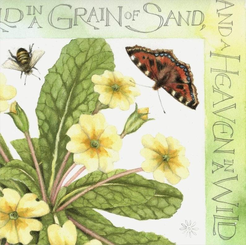 Archival print Primroses 7 x 7 British wildflowers Botanical watercolor Watercolour painting by Helen Lush William Blake poem
