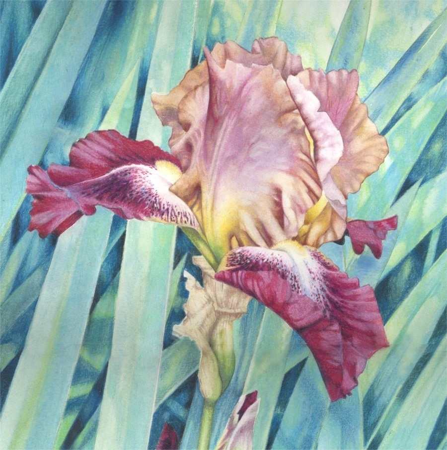 Watercolour painting bearded iris original painting etsy zoom izmirmasajfo