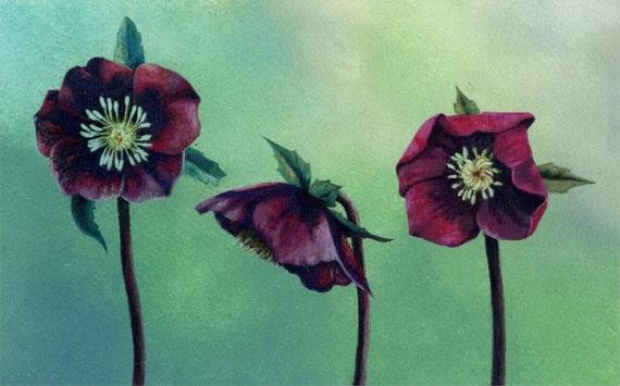 Original Pastel Of Red Hellebore Flowers Botanical Art Etsy
