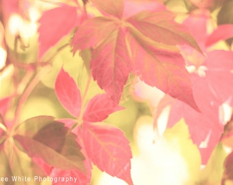 Autumn Leaves, Macro photography, Fine Art print, Ready to frame, nature photograph, decor, wall print, Reds, Colourful, Autumn, Fall