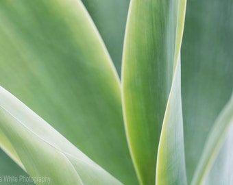 Nature's art, Landscape photography, Macro, Fine Art print, Ready to frame, Home decor, Wall hanging, Nature, Succulents, Greens, Australian