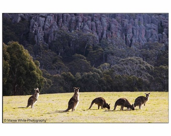 Kangaroos at Hanging Rock, Landscape photography, Fine Art print, Ready to frame, Home decor, Wall hanging, Australian wildlife