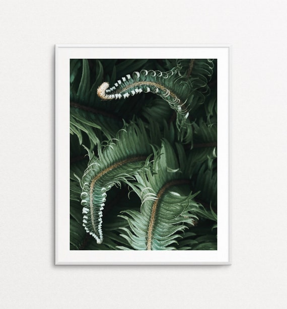 Ferns Print, Ferns Wall Art, Nature Wall Art, Nature Print, PNW Print, PNW Photography